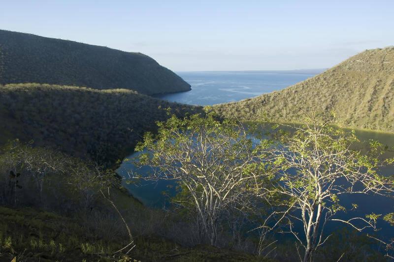 Caleta Tagus y la laguna Darwin.