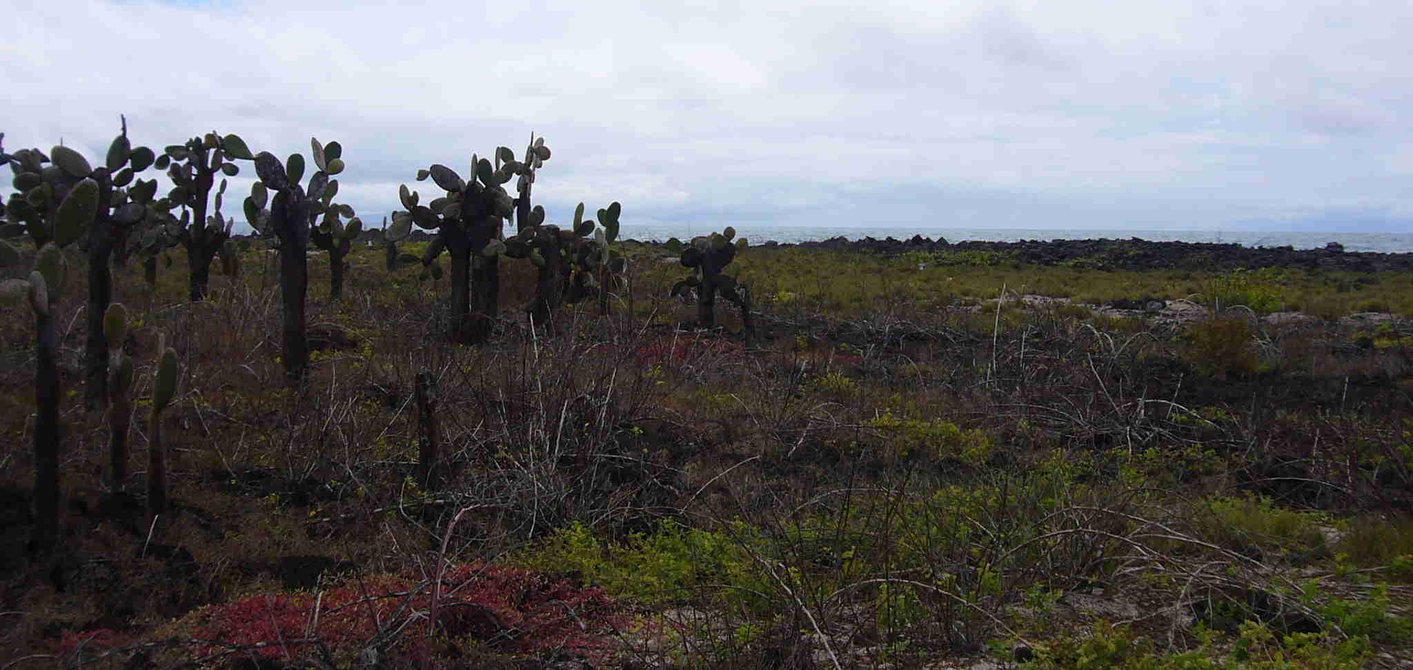 Paisaje con cactus en Galápagos.