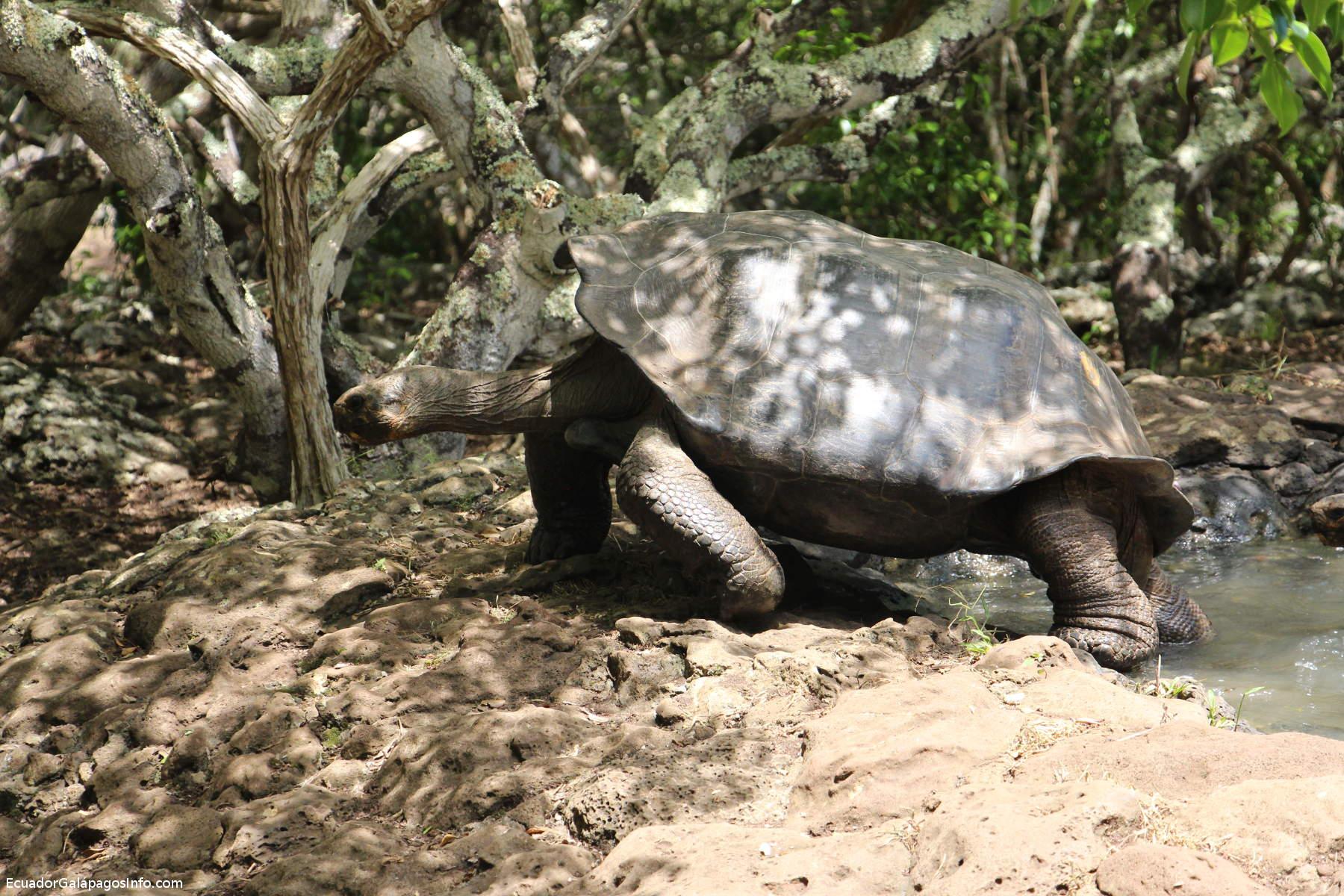 Tortuga Gigante en la Galapaguera.