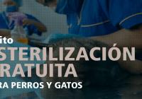 esterilizacion-gratuita-de-mascotas-perros-gatos-quito