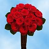 Fresh Cut Roses Red   50 Red Paris Roses