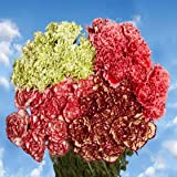 200 Carnations Novelty Color