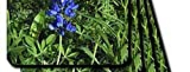Bluebonnet – Set Of 8 Ceramic Tile Coasters