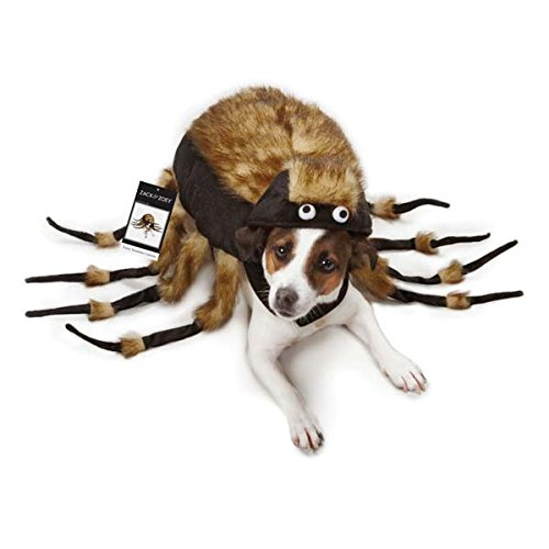 Zack u0026 Zoey Fuzzy Tarantula Costume ...  sc 1 st  Dachshund Gifts for Dog Lovers & A Dachshund Spider Costume for your Little Hallowiener - Dachshund ...