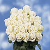 Beautiful Off White Roses with a Creamy Yellow Center | 100 Mount Everest