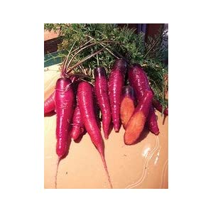 Purple carrots with orange centers