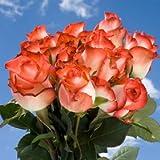 Fresh Cut Roses | 50 Blush Roses