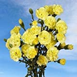 160 Mini Carnations Yellow