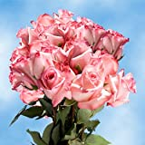 Pink Birthday Roses for Delivery - 50 Pink Roses