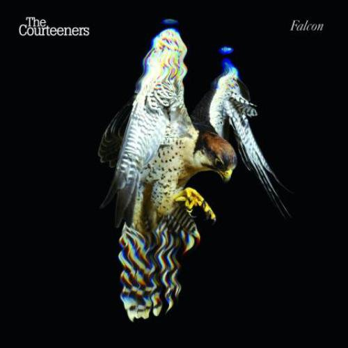 The Courteeners - Falcon