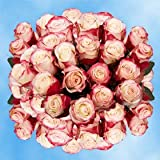Fresh White Roses with Red Tips Delivery | 100 White And Red Sweetness Roses