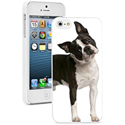 Apple iPhone 6 6s Hard Back Case Cover Cute Confused Boston Terrier Dog (White)