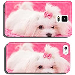 pedigree maltese dog cell phone cover case iPhone6