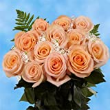 1 Dozen Peach Roses & Fillers | Amazingly Radiant!