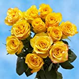 1 Dozen Yellow Roses | Amazingly Radiant!