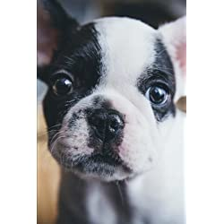 Boston Terrier Puppy Journal: Journal / Lined Notebook / Diary