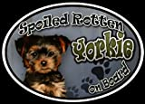 Yorkie Puppy - Spoiled Rotten Oval Dog Magnet for Cars