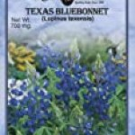 Texas Bluebonnet (W)
