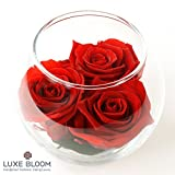 "Luxe Bloom | Crimson Preserved Roses last 60 days | Best Gift for Mother's Day or Any Occasion | 3 crimson roses & greens in a 4"" glass bubble"
