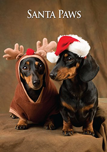 Best Selling Miniature Dachshund Christmas Cards