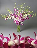 Orchid Bouquet and Lei