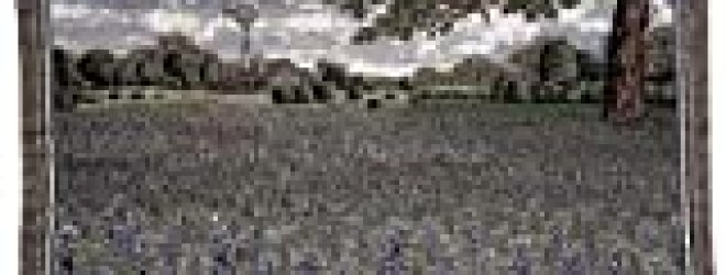 Field of Texas Bluebonnet Flowers Tapestry Throw Blanket 50″ x 60″