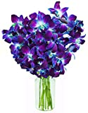 Blue Orchid Fresh Flower Bouquet (10 Stems) - With Vase
