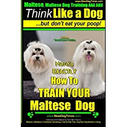 Maltese, Maltese Dog Training AAA AKC: Think Like a Dog ~ But Don'T Eat Your Poop! | Maltese Breed Expert Training |: Here's EXACLTY How To TRAIN Your Maltese Dog (Volume 1)