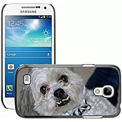 Hot Style Cell Phone PC Hard Case Cover // M00129967 Shitzu Maltese Dog Aggressive Horror // Samsung Galaxy S4 Mini i9190