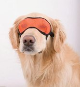 Buy Doggles Mesh Eyewear