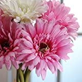 Sweet Hues of Pink and Cream Gerbera Daisy Stems Tied with Raffia for Arranging, Crafting and Decorating- 3 Bundles