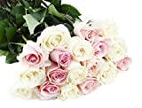 Bouquet of Long Stemmed Pink and White Roses (Dozen and a Half) - With Vase