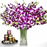 Fresh Flowers - 20 Premium Purple Dendrobium Orchids with Vase