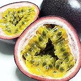 パッションフルーツ 約1kg (約8-12玉) 沖縄県産 農家直入荷で安い新鮮 南国トロピカルフルーツ 香りの良い果物