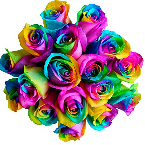 12 stems fresh cut rainbow roses from flower explosion for How to color roses rainbow