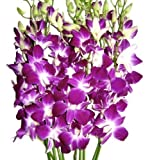 Valentine's Day -Purple Dendrobium Orchids