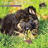 German Shepherd Puppies 2015 Wall Calendar