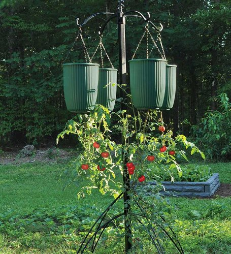 Upside Down Tomato Plant Grower