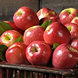Pink Lady Apples - 7 lbs - The Fruit Company