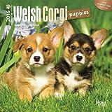Welsh Corgi Puppies 2016 Mini 7x7 (Multilingual Edition)