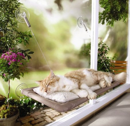 cat shelf by the window