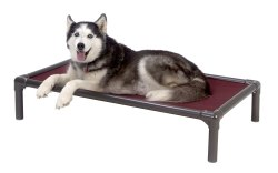 Kuranda-Walnut-PVC-Chewproof-Dog