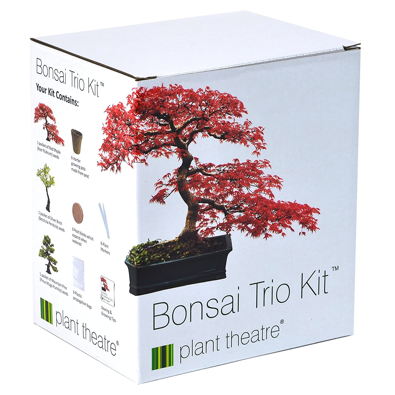 bonsai tree kit 100 Cheap Thoughtful Gift Ideas For Her Under £20