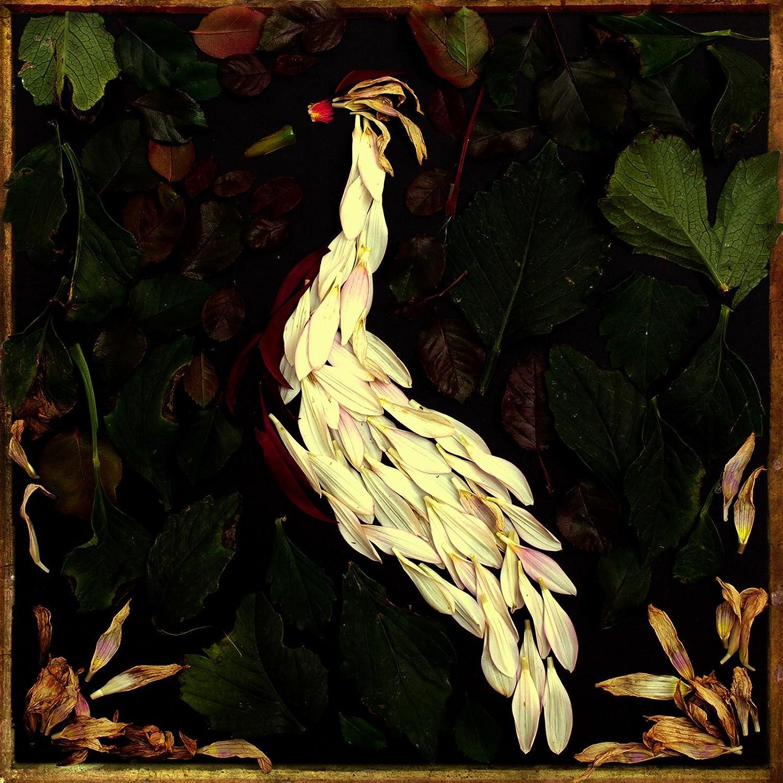 Fortunate Fall Album Art