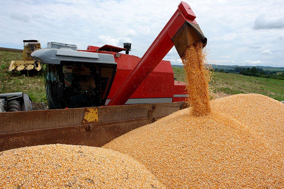 Milho: Com safra americana no radar, mercado inicia a semana em queda na Bolsa de Chicago