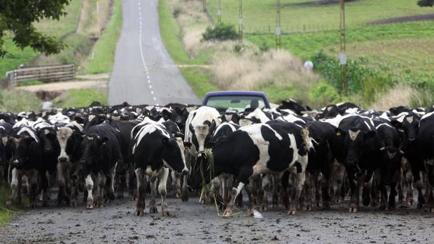 Open Country challenges validity of Fonterra's milk price
