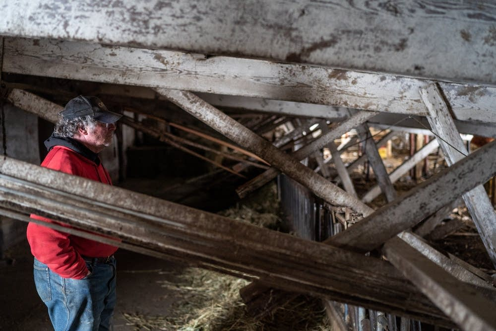 As barns collapse, farmers lose cows, income, sleep