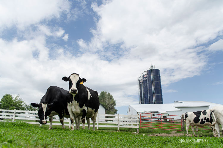Dairy faces a tough economy and tight credit