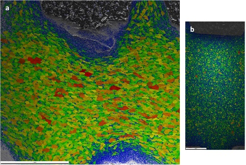 Grain maps of the two screws shown at the same scale illustrating the difference in grain size. a) Shows a coarse-grained microstructure and b) depicts a fine-grained microstructure.