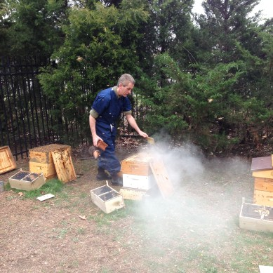 Calming Bees with a Smoker, Hofstra NS-LIJ School of Medicine, Hofstra, Hampstead, NY, photograph by Nancy Kheck.